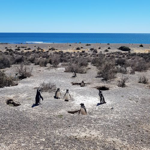 penguinrookery