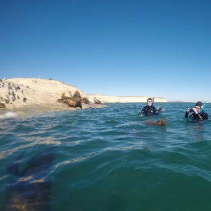 SnorkelingSeaLions