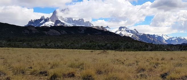 PatagonianWildCow