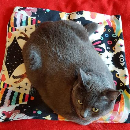 Birds eye view of a chonky grey cat in loaf form on a multicoloured pillowcase.