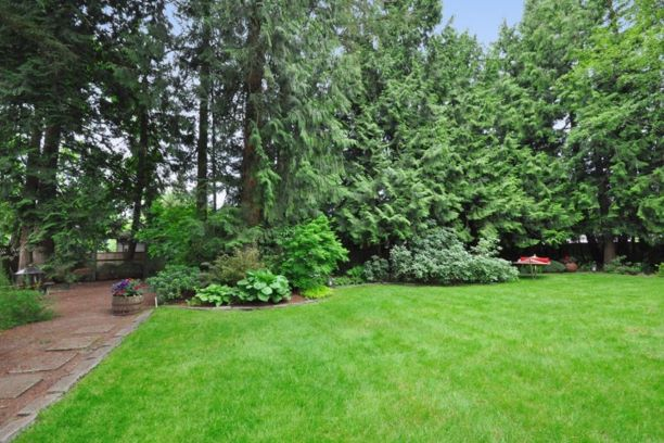 A large backyard bordered by mature cedars.