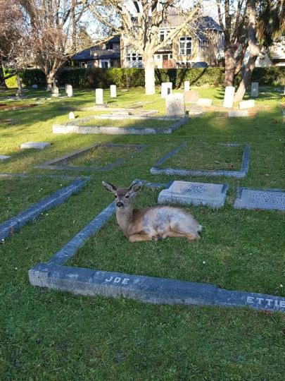 A deer lies on a grassy burial plot with a concrete border. The name Joe is etched in the concrete.