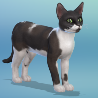 The Sims 4 version of my black and white cat, Bubble.