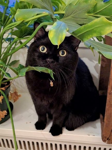 A black cat looks up at the camera with dilated pupils from behind a plant.