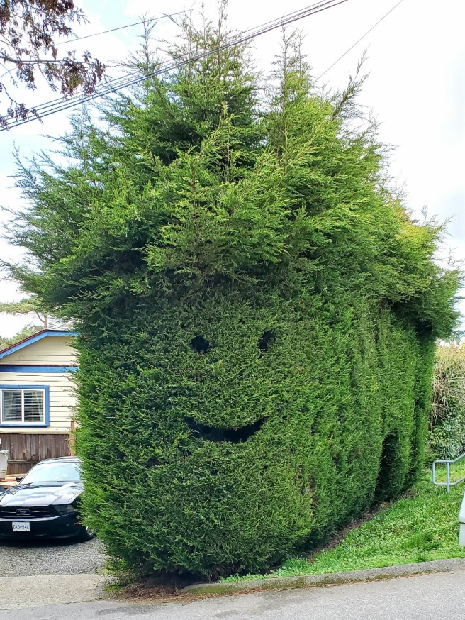 A giant shrub with eyes and a smiling mouth carved out.