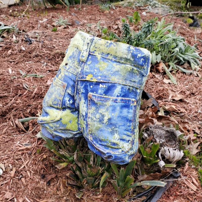 The rear of denim shorts with patina slipped over a plant with thick leaves.